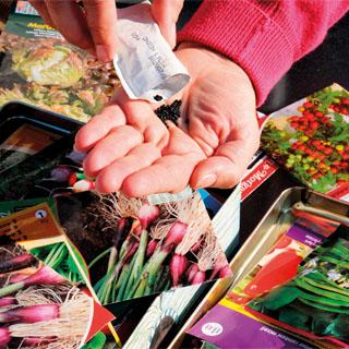 Veg, Flower and Herb Seeds