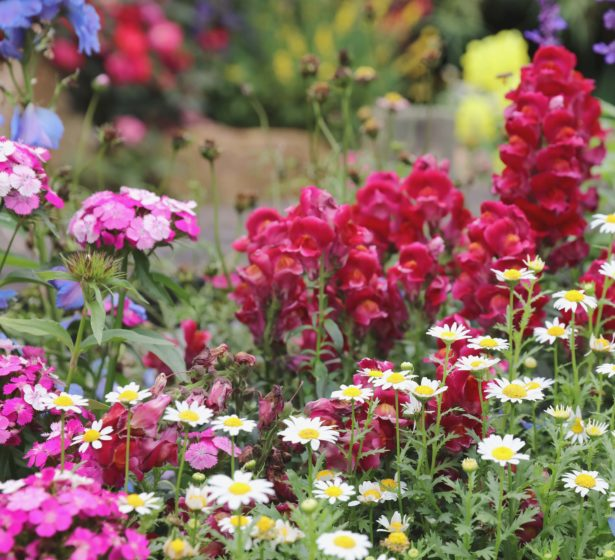 In The Flower Garden This July