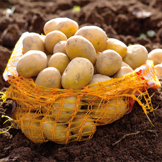 Seed Potatoes Web Offer
