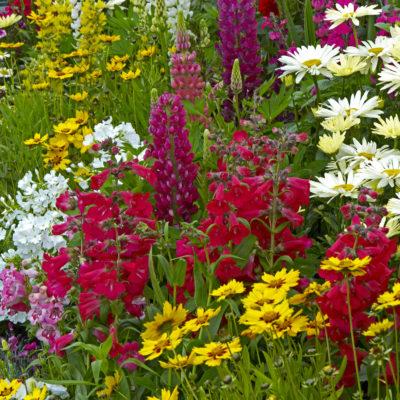 Starter Herbaceous Perennials