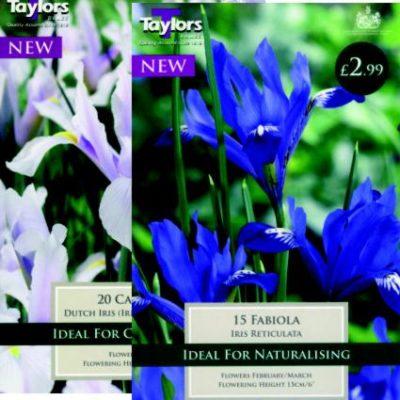 Iris Dwarf & Dutch Bulb Packs