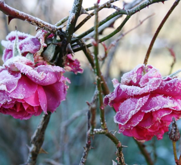 In The Flower Garden In January