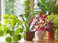 home garden houseplant april spring