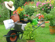 around garden may monthly tips