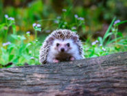 wildlife in the garden in may monthly tips