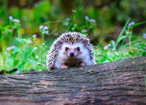 Wildlife In The Garden In May