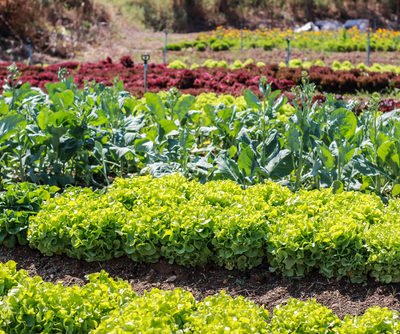 vegetable garden may tips monthly