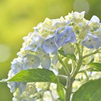 flower garden june sm