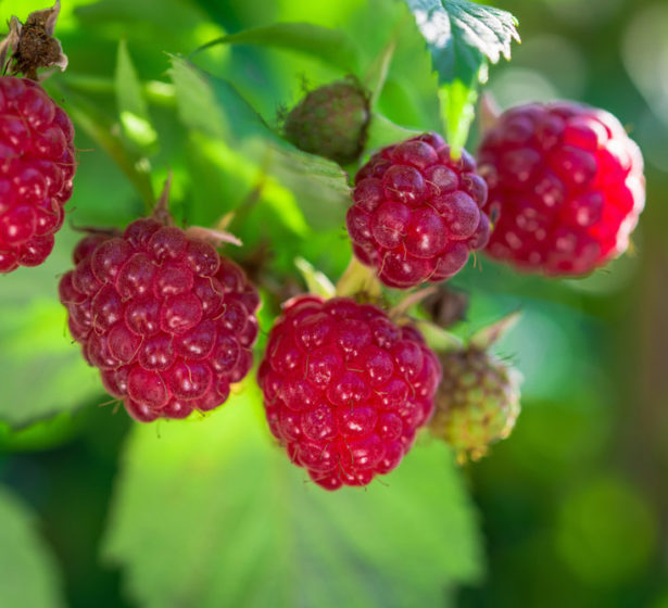 In The Fruit Garden In August