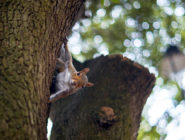 Squirrel Wildlife August