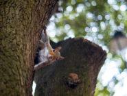 Squirrel Wildlife August