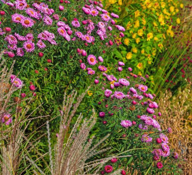 In The Flower Garden In October