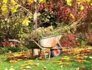 November Around The Garden