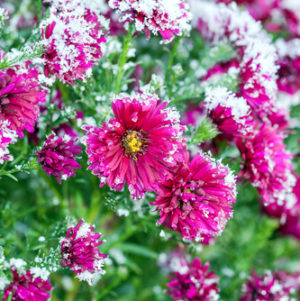 November Flower Garden