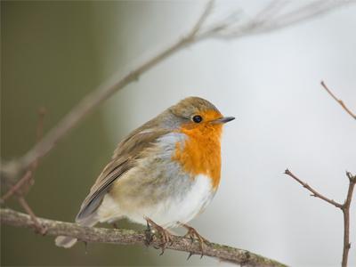 Wildlife In The Garden In December