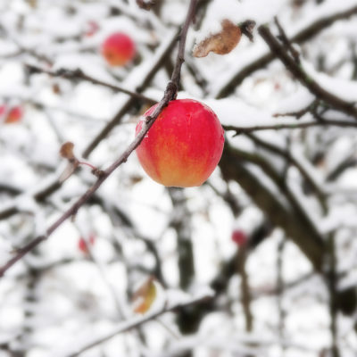 January Garden Advice - Fruit Garden
