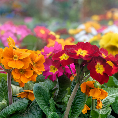 In The Flower Garden In March