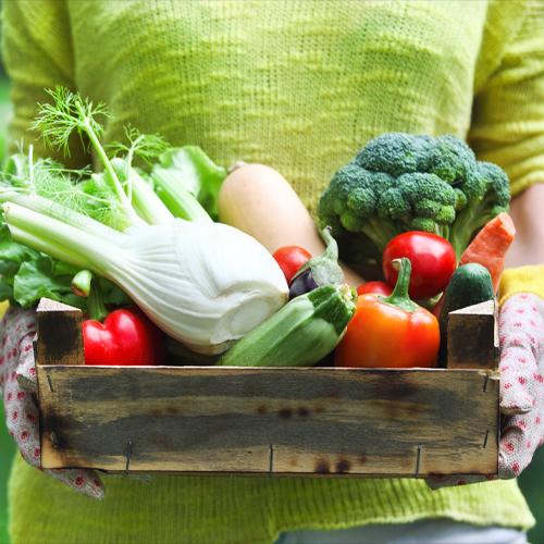 In The Vegetable Garden In March