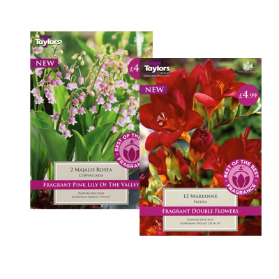 Select the Best of the Best Fragrance Range Bulbs
