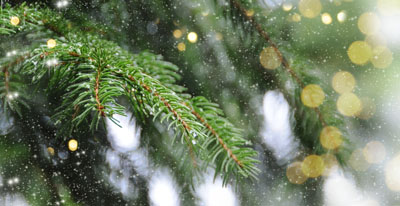Premium Quality Real Christmas Trees in-store end of November