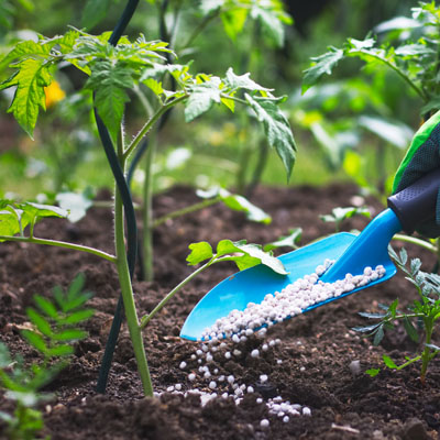 Garden Fertilizers and Plant Feeds