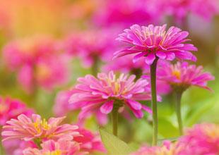 Instant flower colour for autumn pots